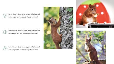 Squirrel iMac Keynote_05
