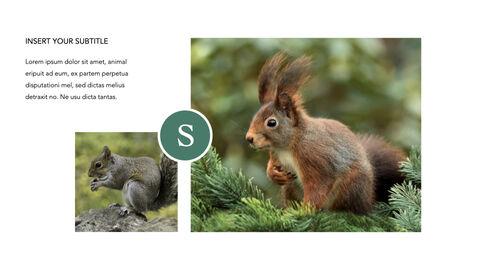 Squirrel iMac Keynote_12