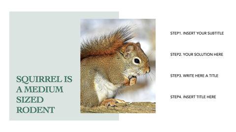 Squirrel iMac Keynote_13