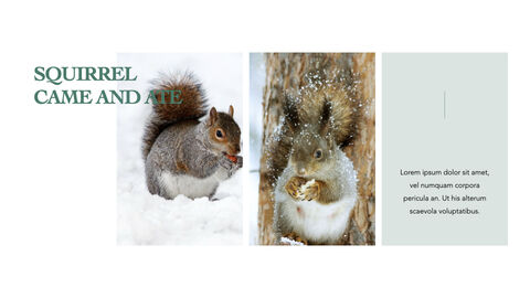 Squirrel iMac Keynote_14