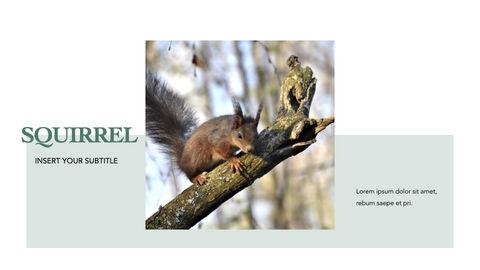 Squirrel iMac Keynote_15