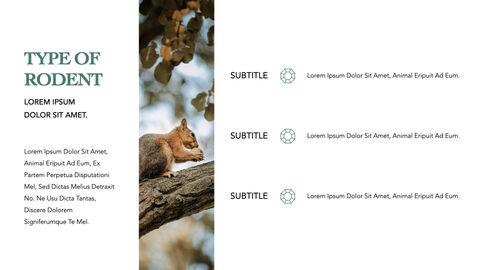 Squirrel iMac Keynote_22