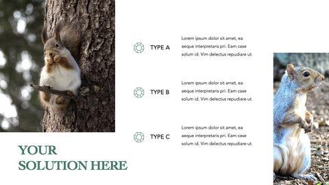 Squirrel iMac Keynote_23