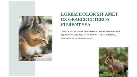 Squirrel iMac Keynote_24
