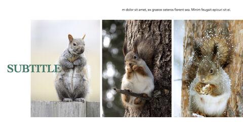 Squirrel iMac Keynote_28