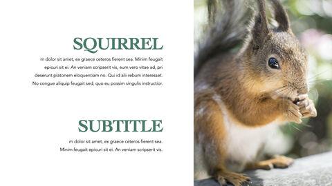Squirrel iMac Keynote_29
