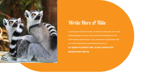 zoo Google Slides Presentation Templates_02