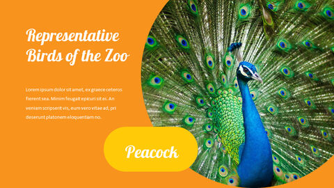 zoo Google Slides Presentation Templates_05