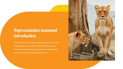 zoo Slide PPT_02