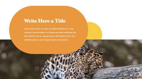 zoo Theme Keynote Design_03