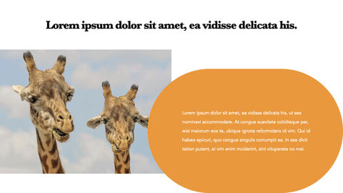 zoo Theme Keynote Design_04