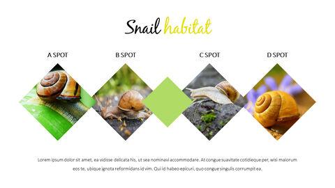 Snail Slide PPT_05