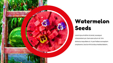 Watermelon Google Slides Themes & Templates_05