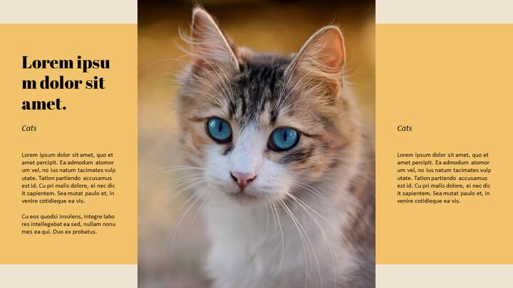 고양이 키우기 프레젠테이션_02