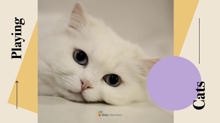 Raise a Cat Keynote Templates_01