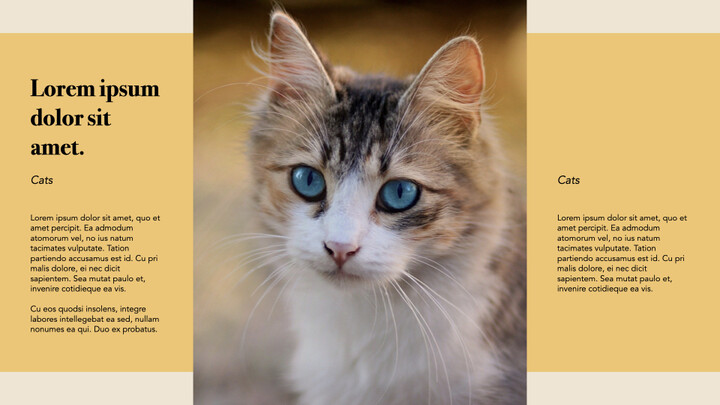 Raise a Cat Keynote Templates_02