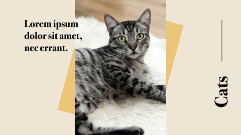Raise a Cat Keynote Templates_04