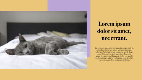 Raise a Cat Keynote Templates_10