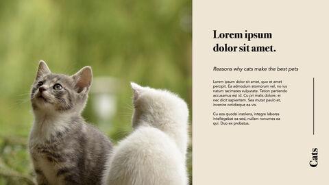 Raise a Cat Keynote Templates_12