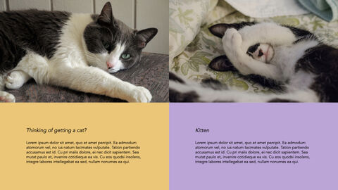 Raise a Cat Keynote Templates_17