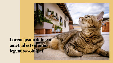 Raise a Cat Keynote Templates_27