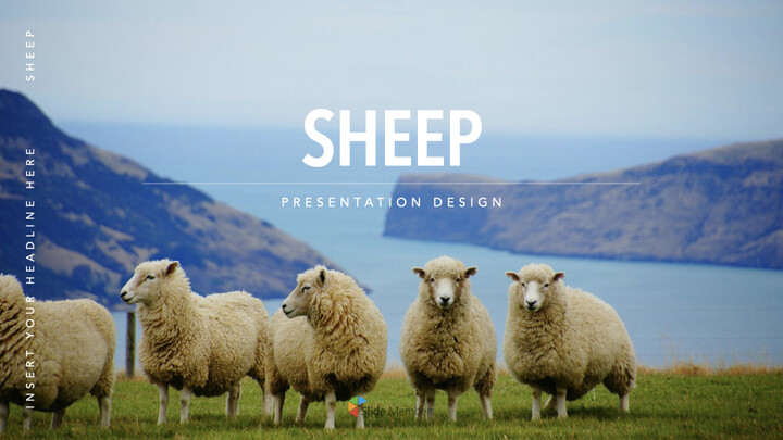 Sheep PowerPoint for mac_01