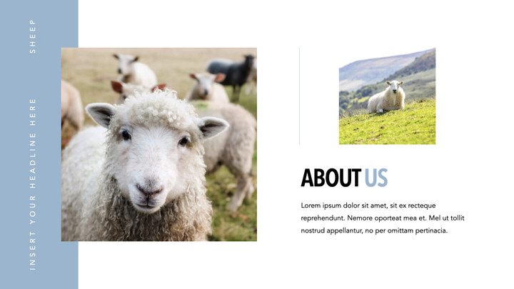 Sheep PowerPoint for mac_02
