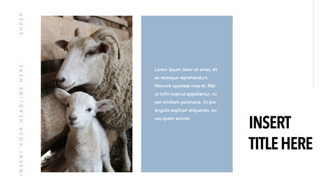 Sheep PowerPoint for mac_03