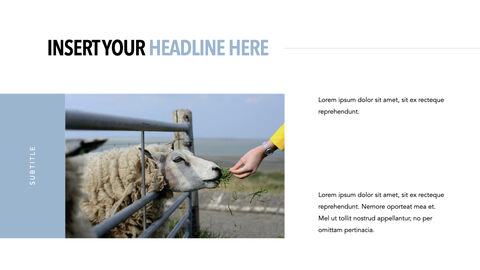 Sheep PowerPoint for mac_11