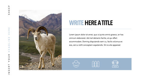 Sheep PowerPoint for mac_13