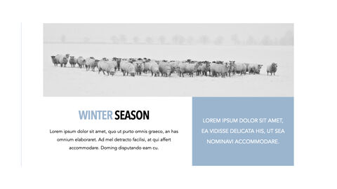 Sheep PowerPoint for mac_15
