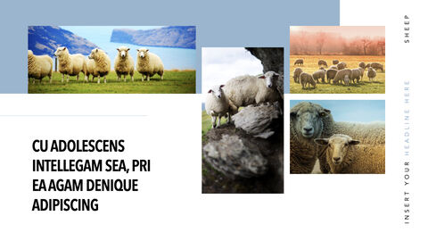 Sheep PowerPoint for mac_21