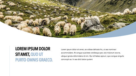 Sheep PowerPoint for mac_23