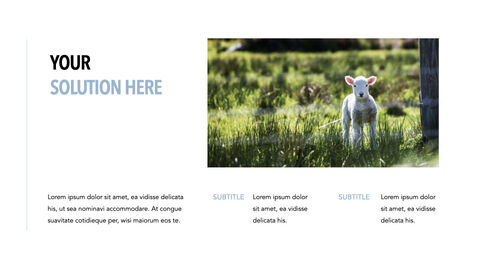 Sheep PowerPoint for mac_24