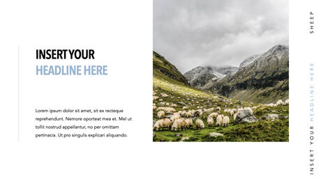 Sheep PowerPoint for mac_26