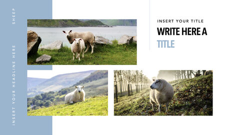 Sheep PowerPoint for mac_29
