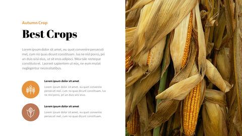 가을 작물 베스트 PPT 슬라이드_05