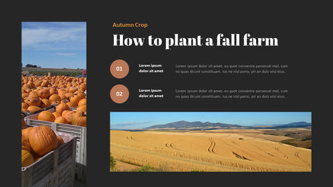 가을 작물 베스트 PPT 슬라이드_09