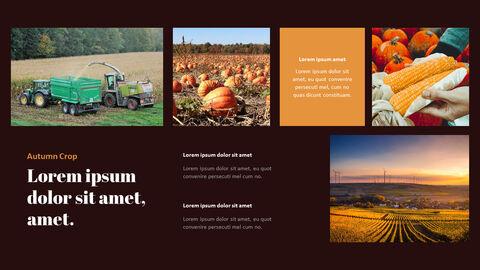 가을 작물 베스트 PPT 슬라이드_15