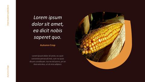 가을 작물 베스트 PPT 슬라이드_19