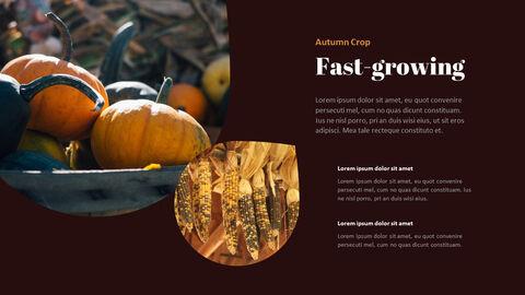 가을 작물 베스트 PPT 슬라이드_20