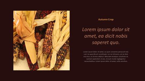 가을 작물 베스트 PPT 슬라이드_21