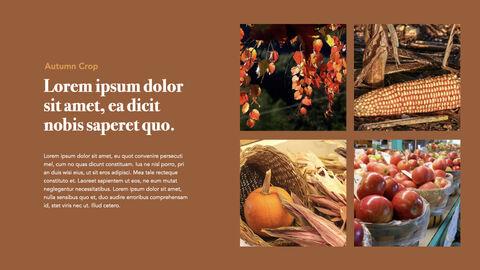 Autumn Crops Windows Keynote_04