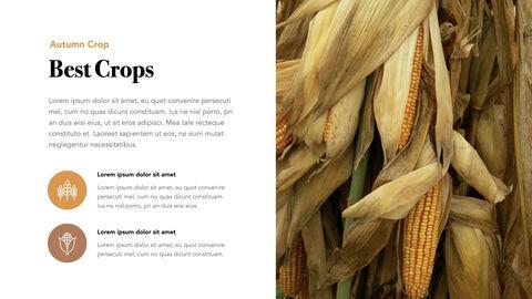 Autumn Crops Windows Keynote_05