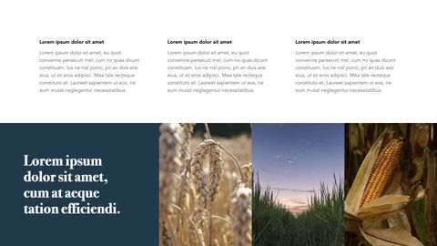 Autumn Crops Windows Keynote_08