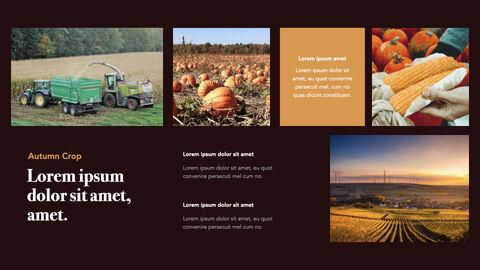 Autumn Crops Windows Keynote_15