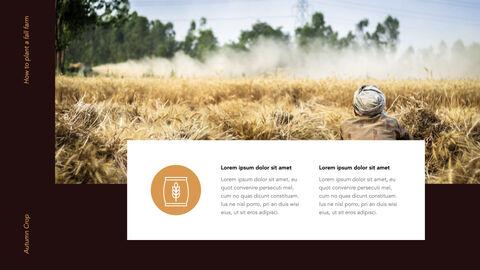 Autumn Crops Windows Keynote_24