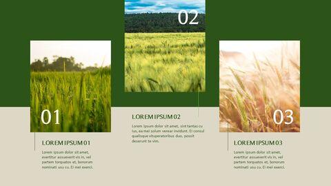 농업 우아한 ppt 템플릿_12
