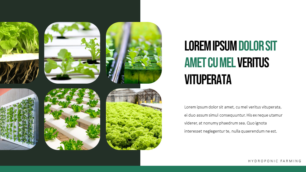 Hydroponic Gardening Ppt Templates Simple Design Nature