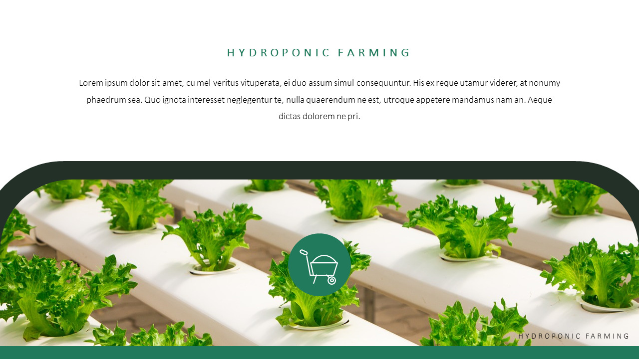 Hydroponic Gardening PPT Templates Simple Design|Nature